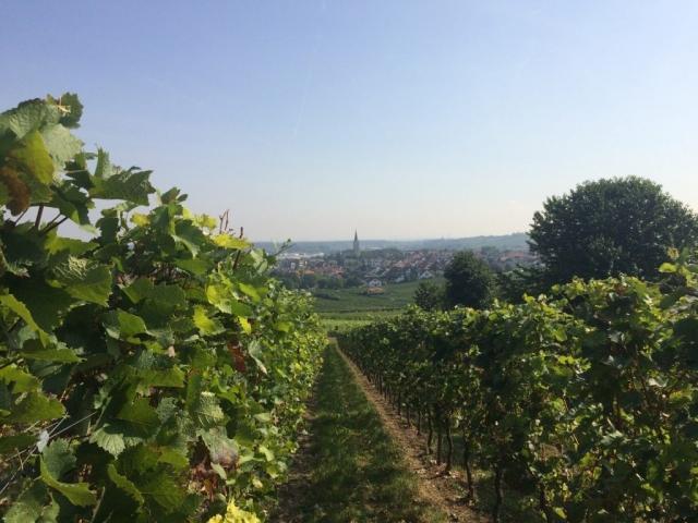 Weingut Arno Kern - Weinlehrpfad 2016