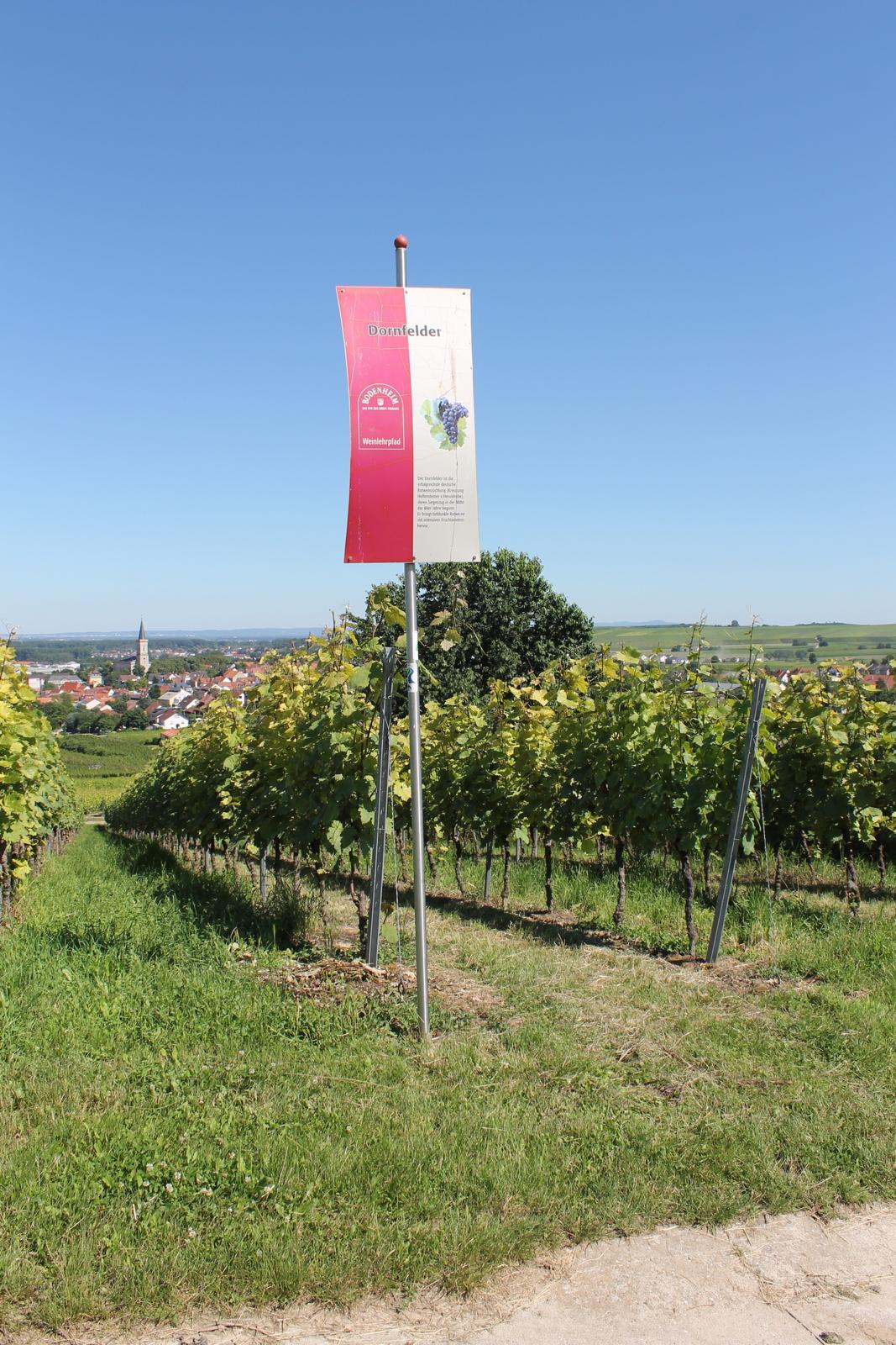 Weingut Arno Kern - Impressionen